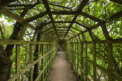 Green tunnel. Perspective view thru green tunnel made from plants Stock Photos