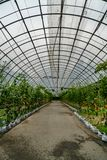 Green tunnel of plants stock photo