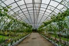 Green tunnel of plants royalty free stock images
