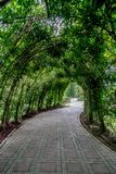Green tunnel of plants. With concrete pathway Stock Photo