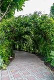 Green tunnel of plants. With concrete pathway Stock Photography
