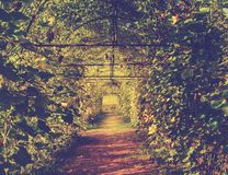 Green tunnel of pumpkin plant Royalty Free Stock Photography