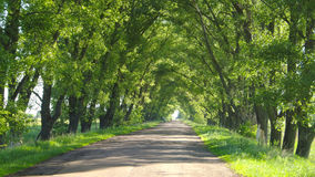 Green tunnel with road Royalty Free Stock Images