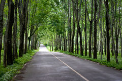 Green tunnel road Royalty Free Stock Photo