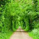 Green tunnel road Royalty Free Stock Images