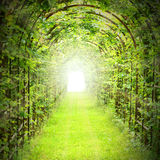 Green tunnel with sun rays. Stock Photos