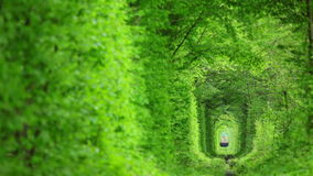 Green Tunnel and the Train. Railway tunnel in the green thickets. Spring. Technical train goes slowly stock video footage