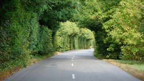 Green tunnel in the trees above road Royalty Free Stock Image