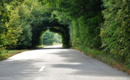 Green tunnel in the trees above road Royalty Free Stock Images