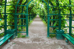 Green tunnel of trees and bushes in the Park. Long green tunnel of trees and bushes in the Park Royalty Free Stock Photos