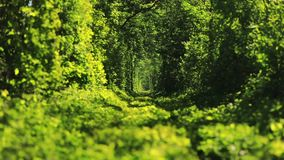 Beautiful tunnel of green trees . Tunnel of love. Old abandoned railway line, in the alley of green trees. Green tunnel of trees in the forest . Tunnel of love stock footage