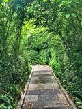 Green tunnels Royalty Free Stock Photo