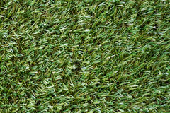 Green turf background Stock Photography