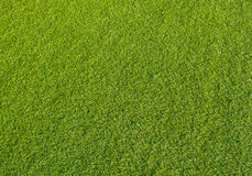 Green turf. Close up background Royalty Free Stock Images