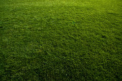 Green turf at soccer field Royalty Free Stock Images