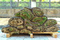 Green turf sods of lawn grass Royalty Free Stock Images