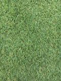 Green turf Royalty Free Stock Photography