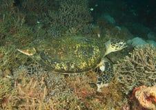 Free Green Turtle Stock Photos - 38048003