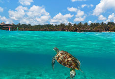 Green turtle at Caribbean beach Royalty Free Stock Photo