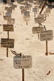 Green turtle eggs buried on the beach in a turtle hatchery Sri Lanka.  Royalty Free Stock Images
