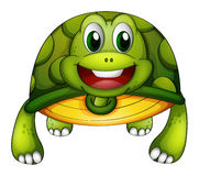 A green turtle Royalty Free Stock Photography