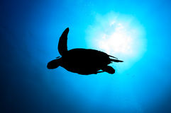 Green Turtle Silhouette. Silhouette of a Sea Turtle with sunburst behind and SCUBA divers bubbles stock images