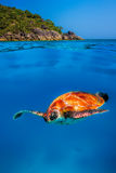 Green Turtle at Similan Islands Stock Photography