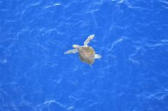 Green turtle travelling through the Pacific Ocean. royalty free stock photos