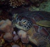 Green turtle stock photos