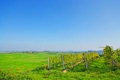 Green tuscany landscape Royalty Free Stock Photography