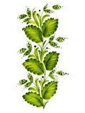 Green twig. Hand drawn, , illustration in Ukrainian folk style royalty free illustration