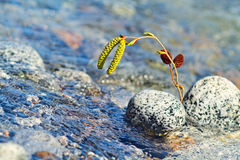 Green twig in mountain river. Royalty Free Stock Photography