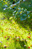 Green twig and sunlit lawn Stock Photography