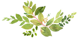 Green twig watercolor illustration Stock Images