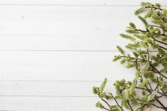 Green twigs of willow on a white table with copy space.  stock photos
