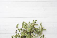 Green twigs of willow on a white table with copy space.  stock images