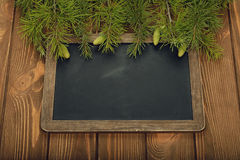 Green twigs Stock Image