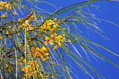 Green Twigs and Yellow Flowers Royalty Free Stock Photo