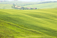 Green typical  tuscan landscape Royalty Free Stock Images