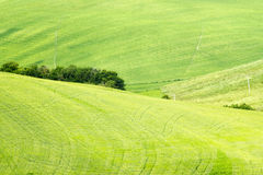 Green typical tuscan landscape in spring time Stock Images