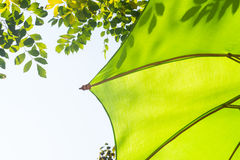 Green umbrella shade Royalty Free Stock Images