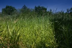Green, uncut grass on the shore of a forest lake stock photos