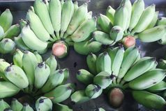 Green or unripe banana Stock Photo