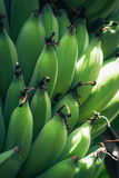 Green Unripe Bananas Royalty Free Stock Photography