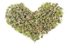 Green unripe blackberries heart concept Royalty Free Stock Photo