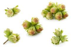 Green Unripe Hazelnuts. On white background royalty free stock image