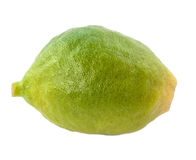 Unripe lemon. Royalty Free Stock Photo