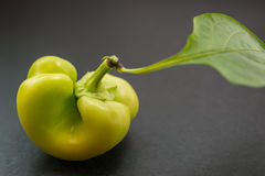 Green unripe paprika. Stock Photos