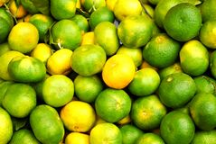Green unripe tangerines Royalty Free Stock Photos