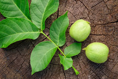 Green unripe walnut and leaves on wooden background. Stock Photography